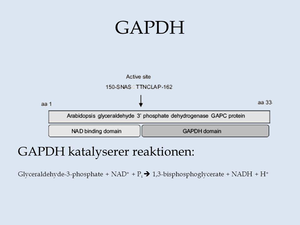 GAPDH GAPDH katalyserer reaktionen:
