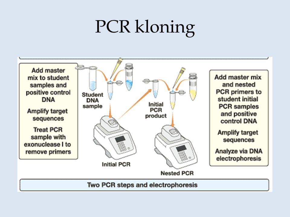 PCR kloning