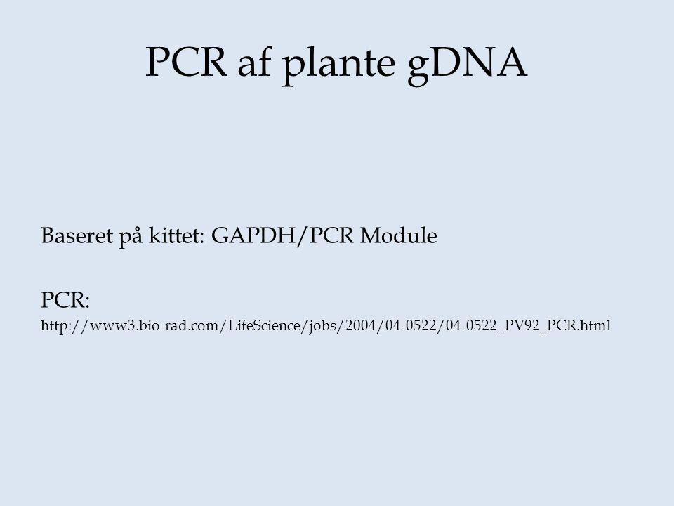 PCR af plante gDNA Baseret på kittet: GAPDH/PCR Module PCR: