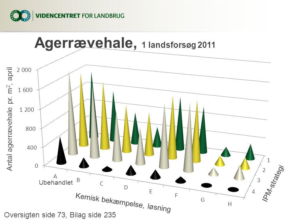 Agerrævehale, 1 landsforsøg 2011