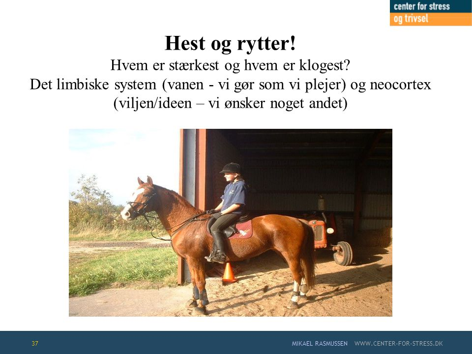 Hest og rytter. Hvem er stærkest og hvem er klogest
