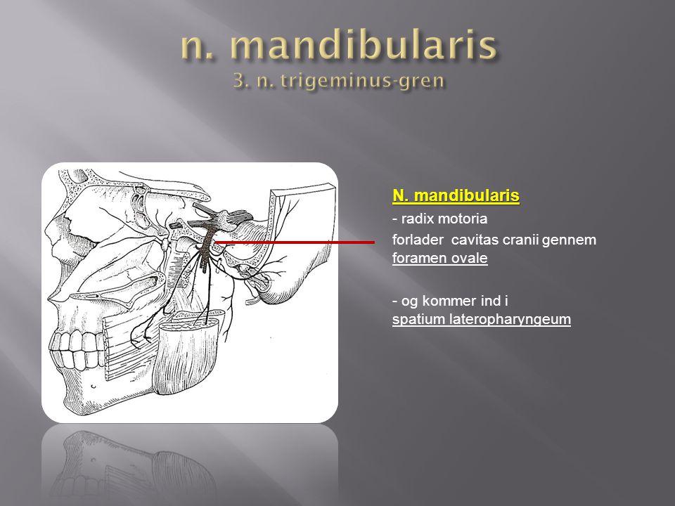 n mandibularis sensorisk motorisk ansigtshud cavitas oris t u00e6nder
