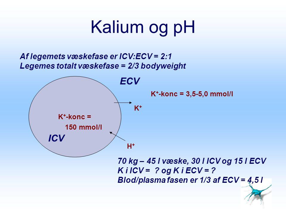 Kalium og pH ECV ICV Af legemets væskefase er ICV:ECV = 2:1