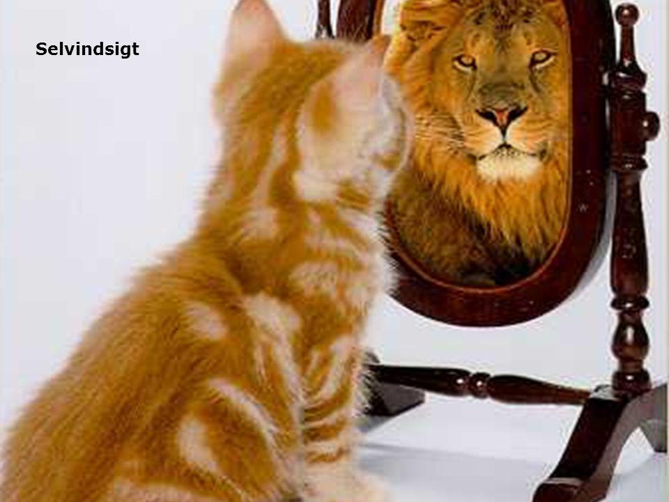 Selvindsigt Hvor er du selv. Placer en post-it Test dig selv!
