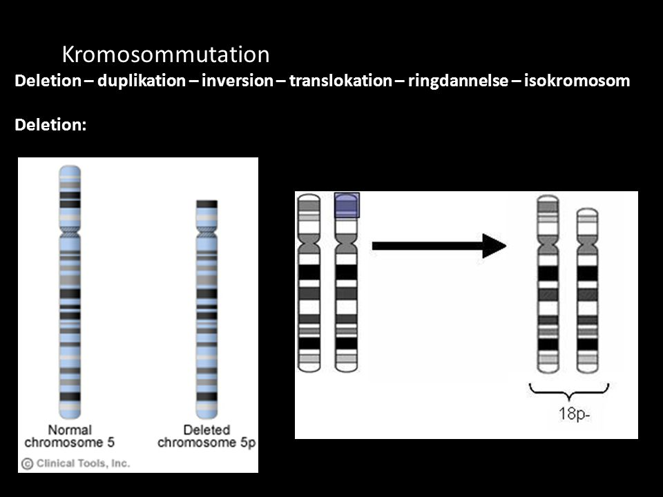 Kromosommutation Deletion – duplikation – inversion – translokation – ringdannelse – isokromosom.