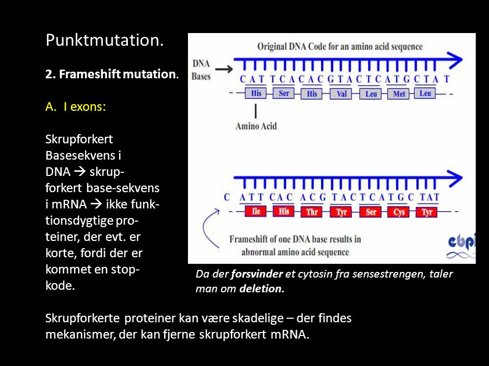 Punktmutation. 2. Frameshift mutation. I exons: Skrupforkert