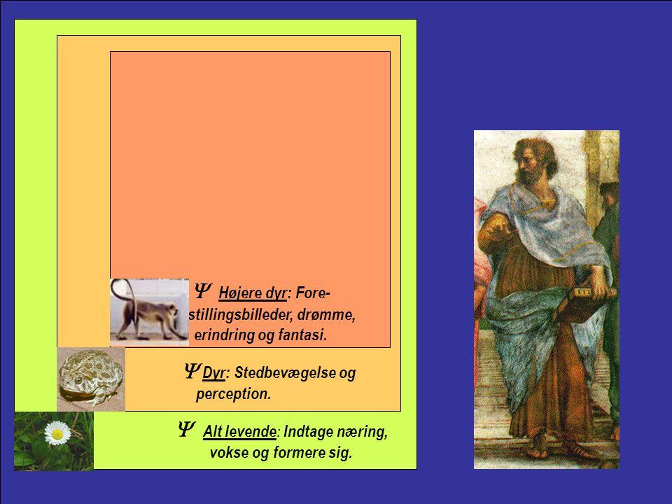 Aristotle Y Højere dyr: Fore- stillingsbilleder, drømme, erindring og fantasi. Y Dyr: Stedbevægelse og perception.