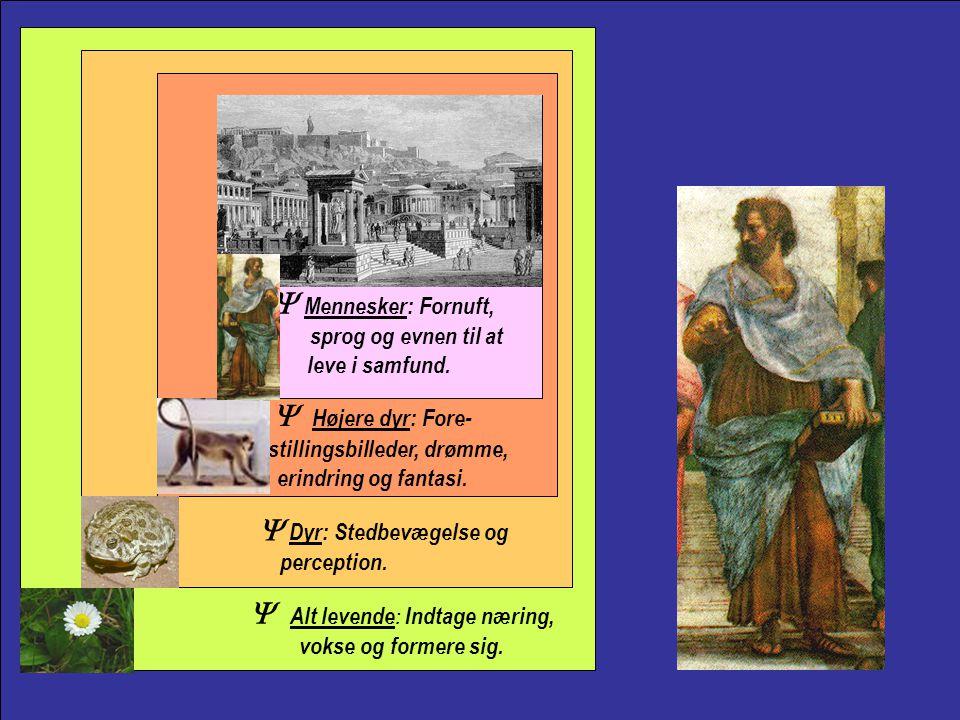 Aristotle Y Mennesker: Fornuft, sprog og evnen til at leve i samfund.