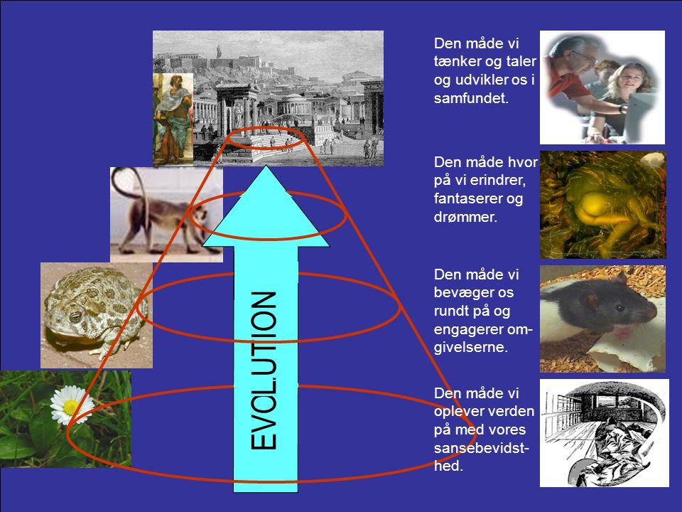 EVOLUTION L Den måde vi tænker og taler og udvikler os i samfundet.
