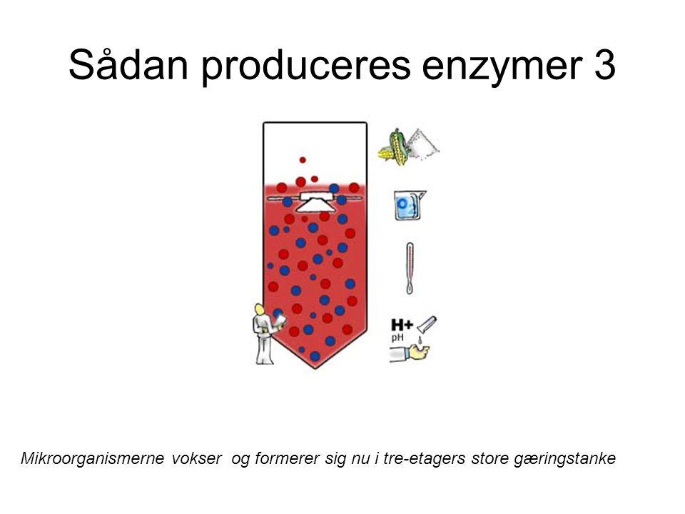 Sådan produceres enzymer 3