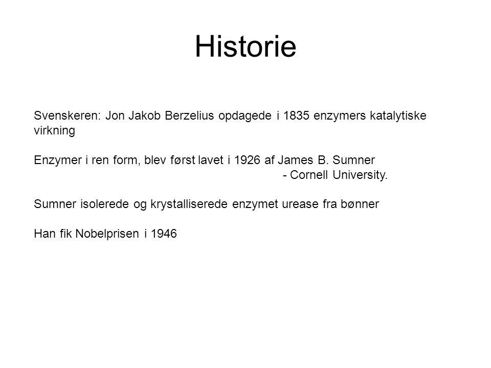Historie Svenskeren: Jon Jakob Berzelius opdagede i 1835 enzymers katalytiske virkning.