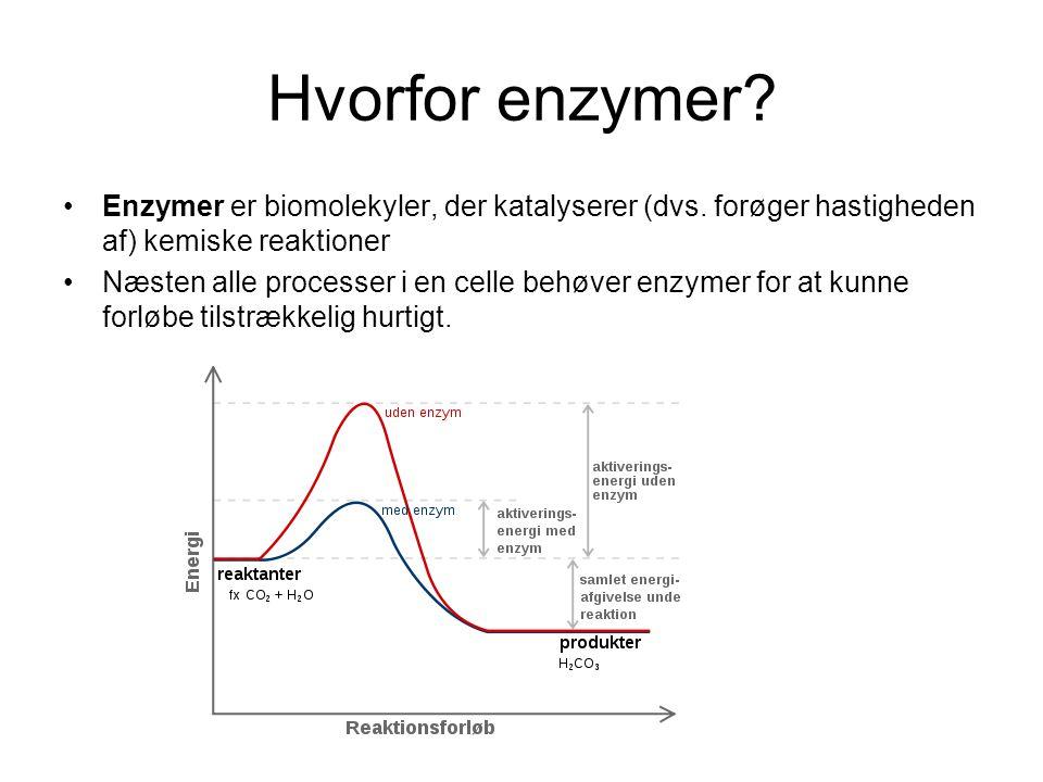 Hvorfor enzymer Enzymer er biomolekyler, der katalyserer (dvs. forøger hastigheden af) kemiske reaktioner.