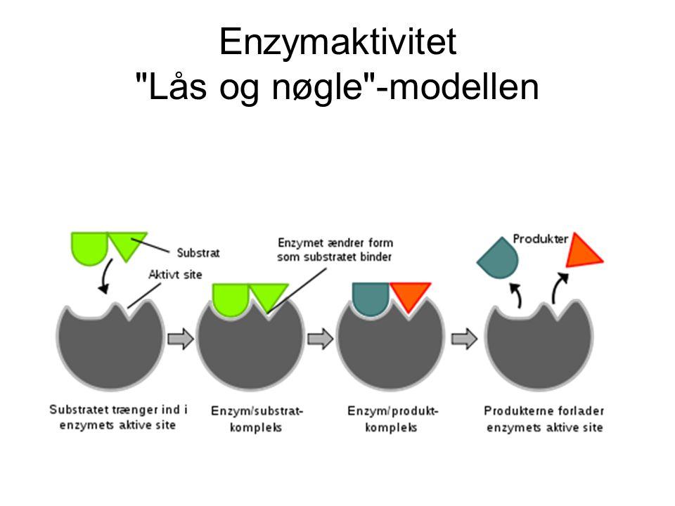 Enzymaktivitet Lås og nøgle -modellen