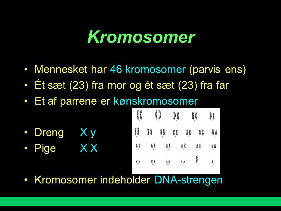 Kromosomer Mennesket har 46 kromosomer (parvis ens)