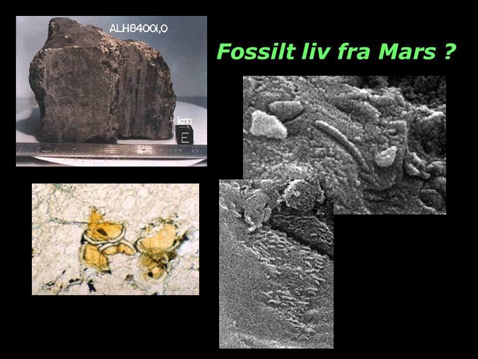 Fossilt liv fra Mars
