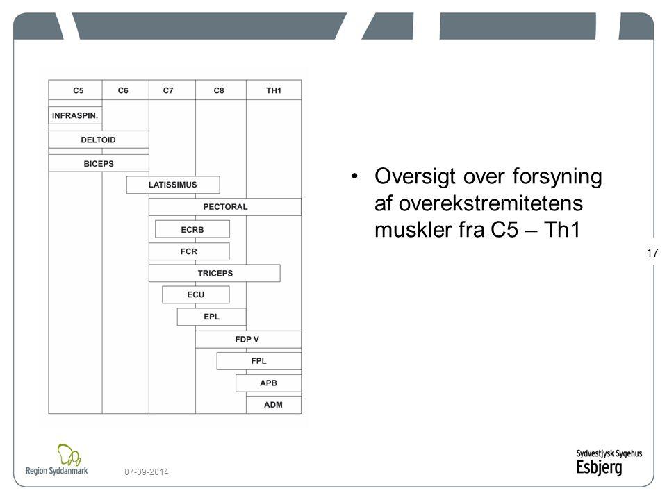 Oversigt over forsyning af overekstremitetens muskler fra C5 – Th1