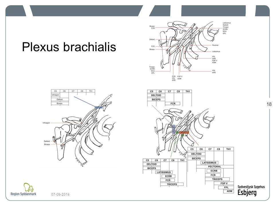 Plexus brachialis 06-04-2017