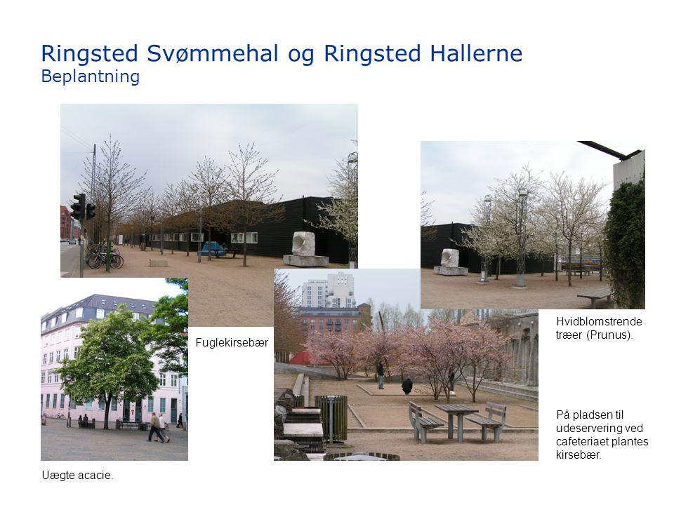 Ringsted Svømmehal og Ringsted Hallerne Beplantning