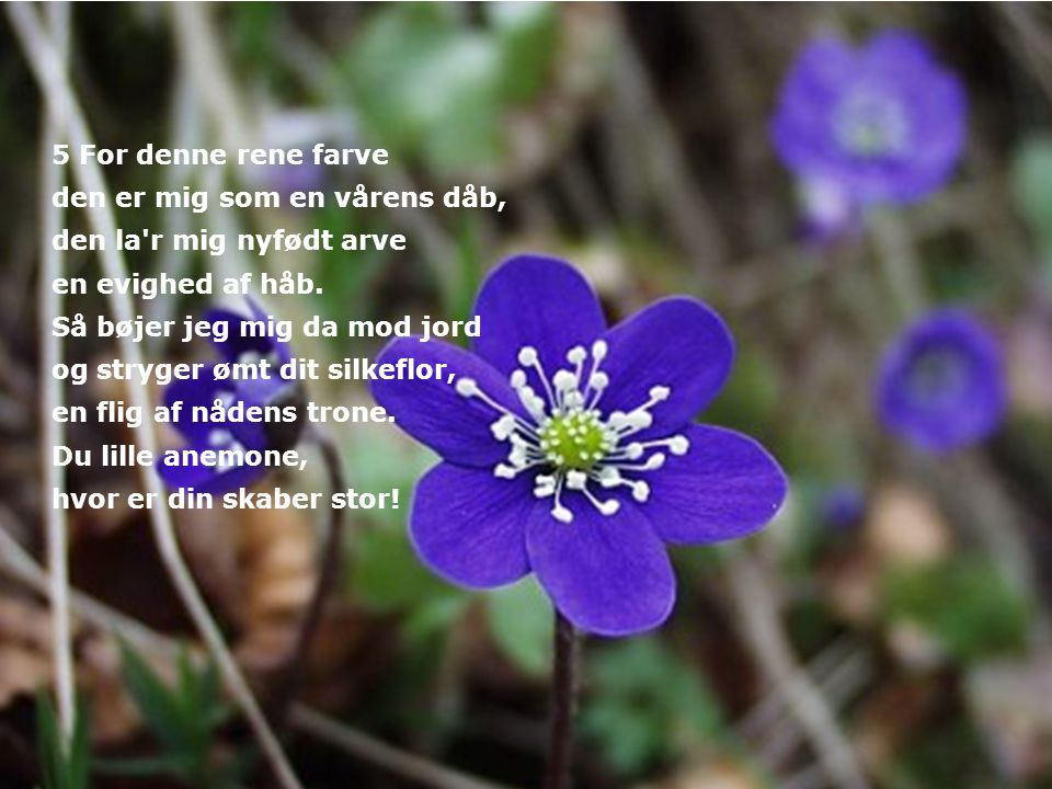 5 For denne rene farve den er mig som en vårens dåb, den la r mig nyfødt arve. en evighed af håb.