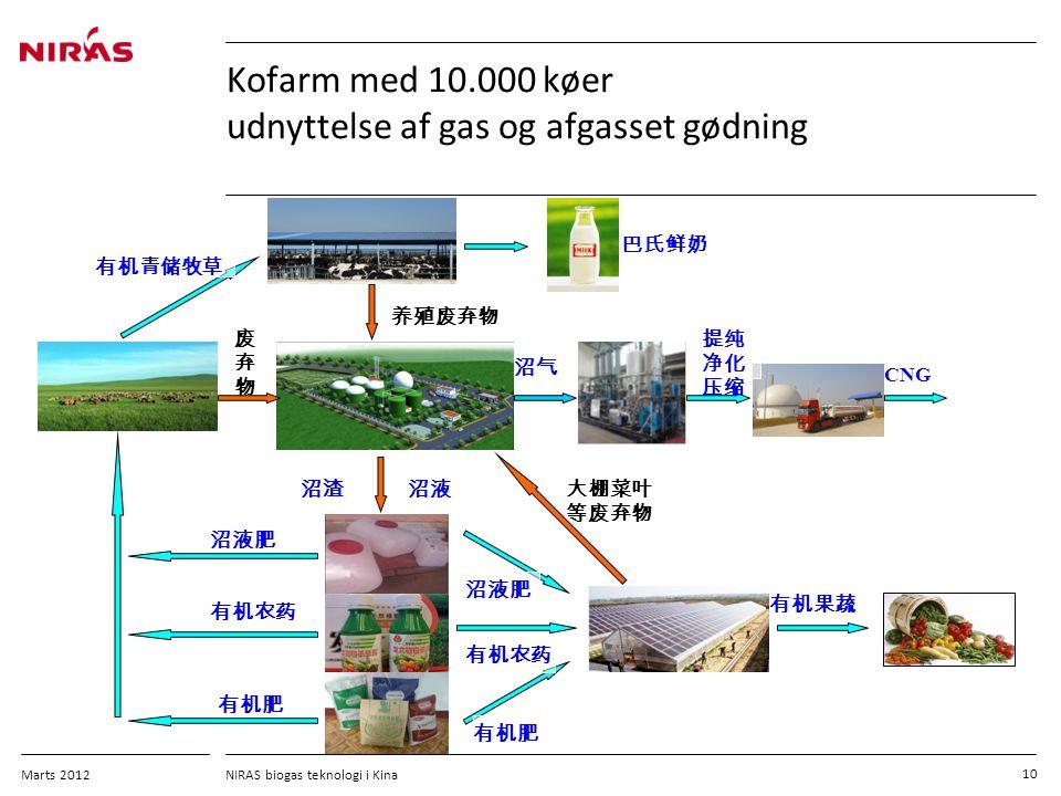Kofarm med 10.000 køer udnyttelse af gas og afgasset gødning