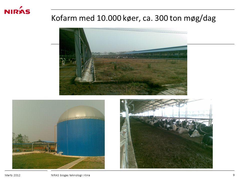 Kofarm med 10.000 køer, ca. 300 ton møg/dag