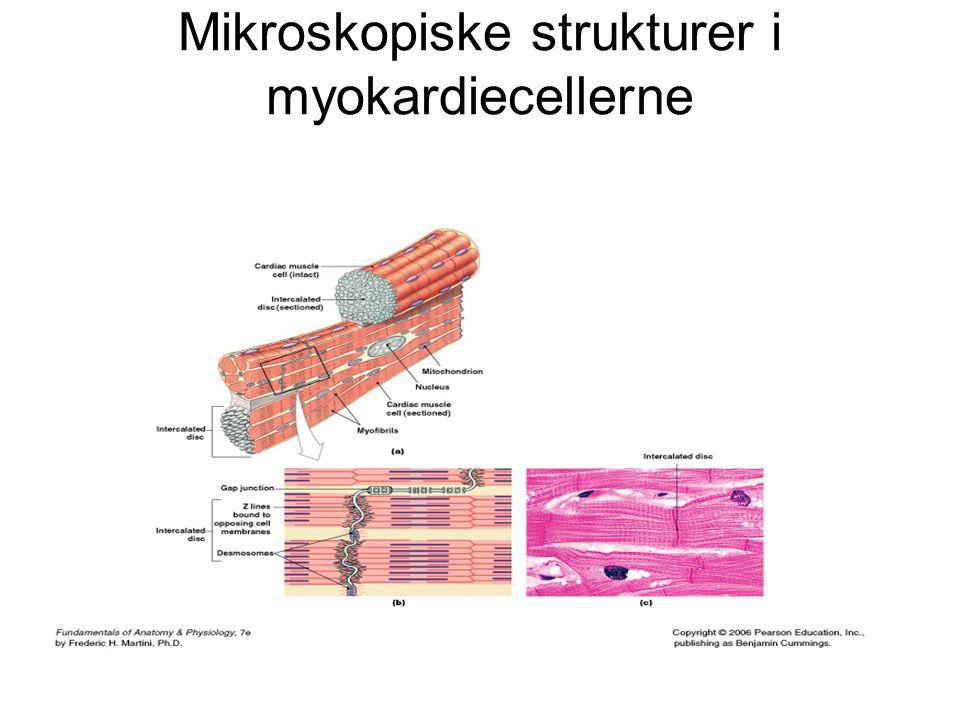 Mikroskopiske strukturer i myokardiecellerne