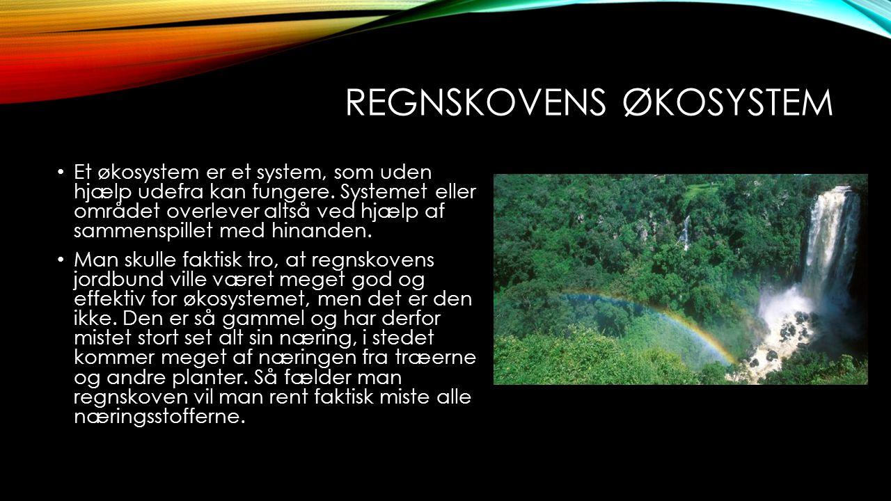 Regnskovens økosystem