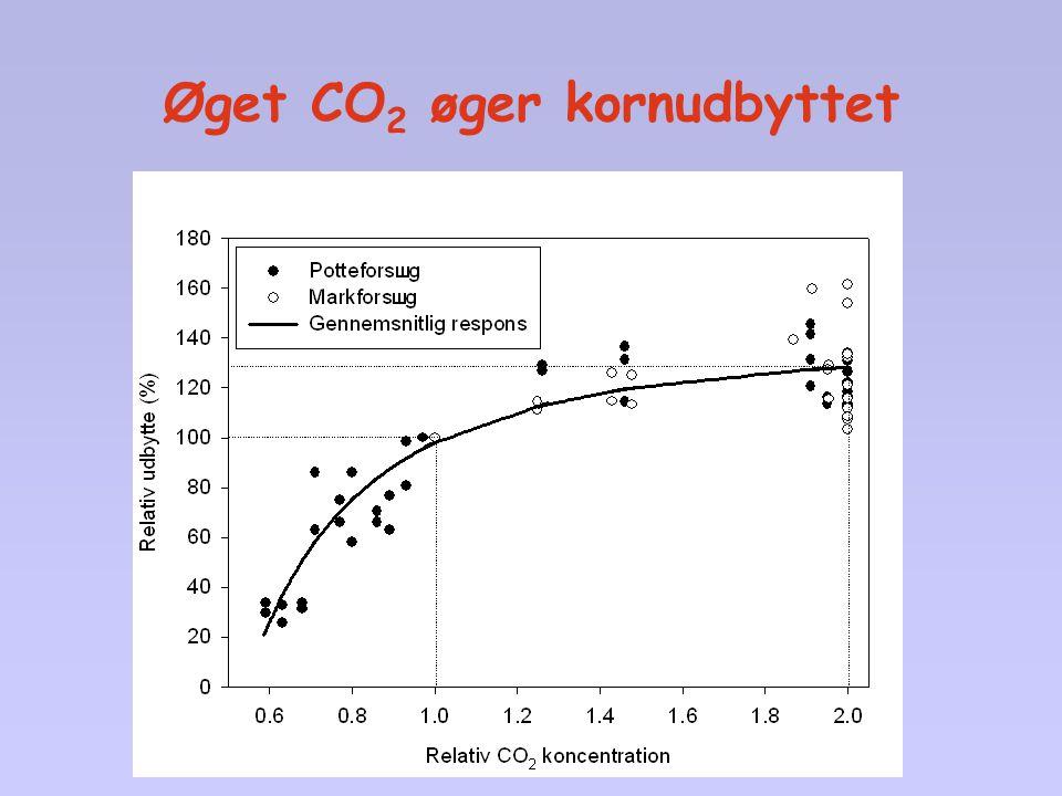 Øget CO2 øger kornudbyttet