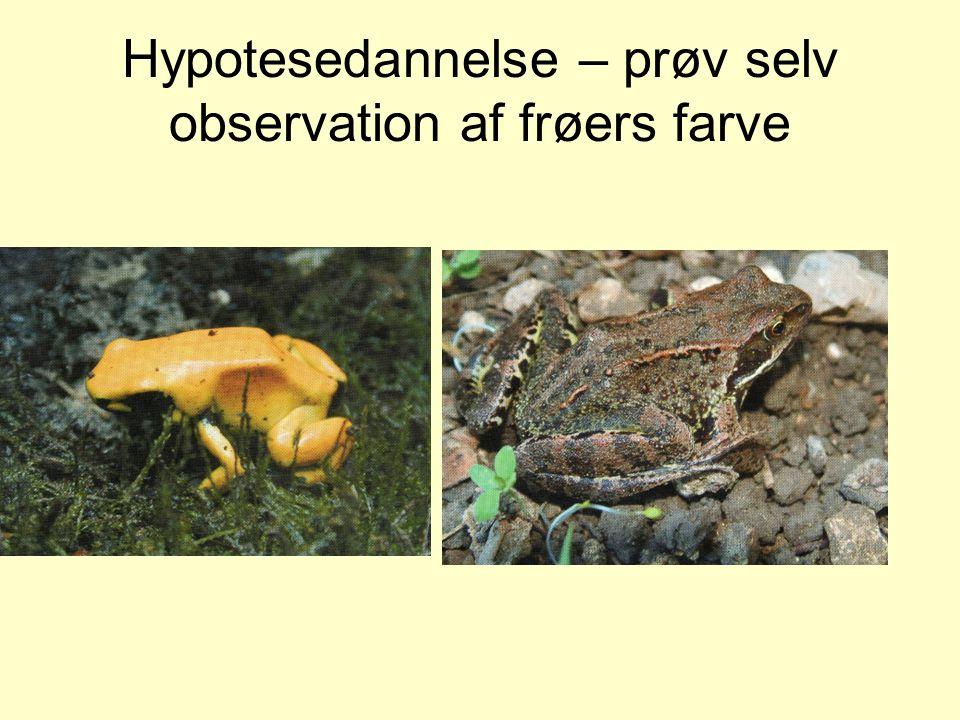 Hypotesedannelse – prøv selv observation af frøers farve