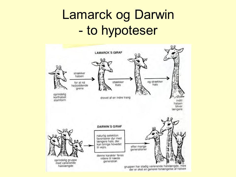 Lamarck og Darwin - to hypoteser