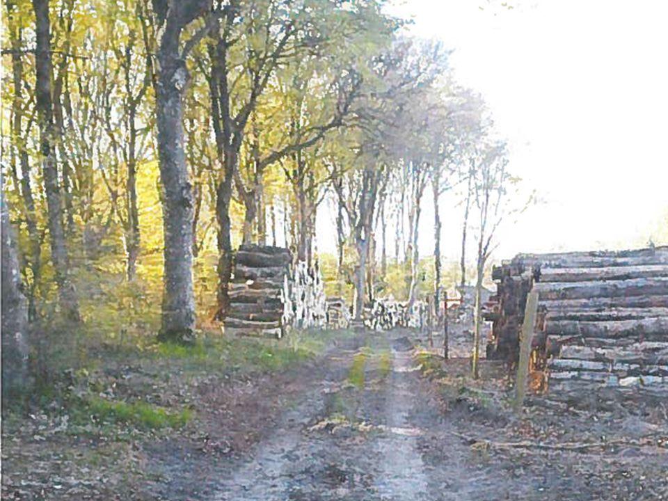 Erfamøde om fredninger - EnviNa, Skibelund Krat oktober 2014