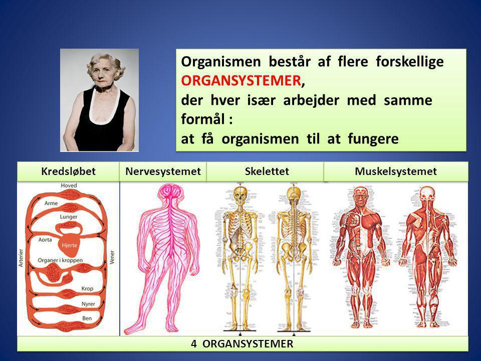 Organismen består af flere forskellige ORGANSYSTEMER,