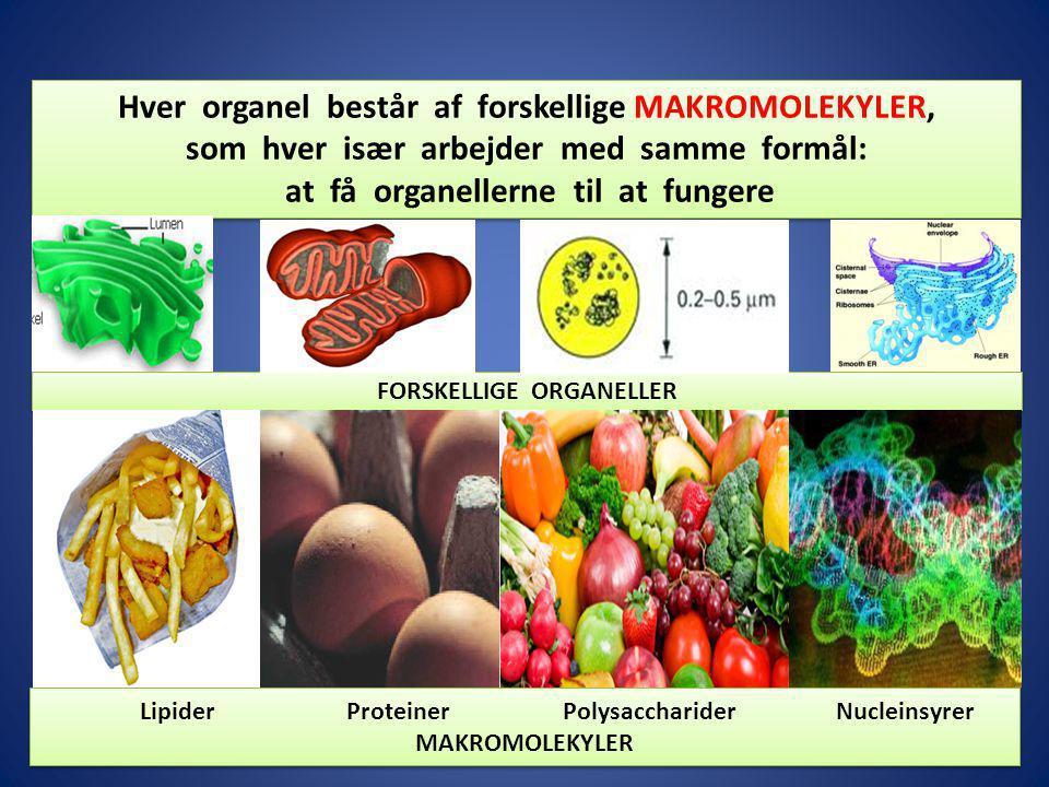 Hver organel består af forskellige MAKROMOLEKYLER,