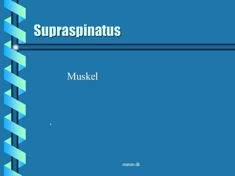 Supraspinatus Muskel . manan.dk