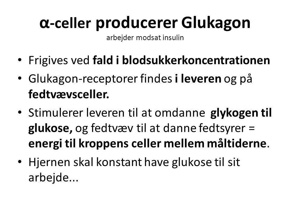 α-celler producerer Glukagon arbejder modsat insulin