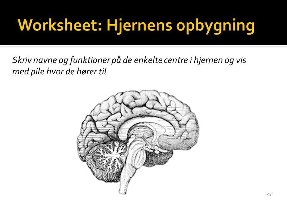 Worksheet: Hjernens opbygning