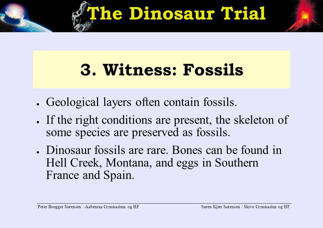 3. Witness: Fossils Geological layers often contain fossils.