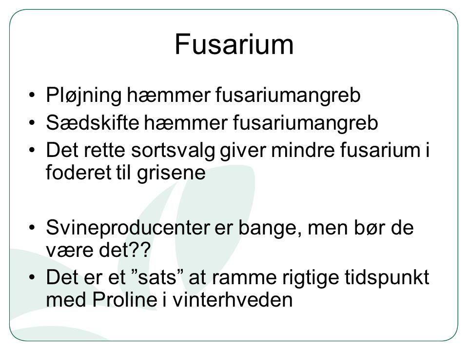 Fusarium Pløjning hæmmer fusariumangreb