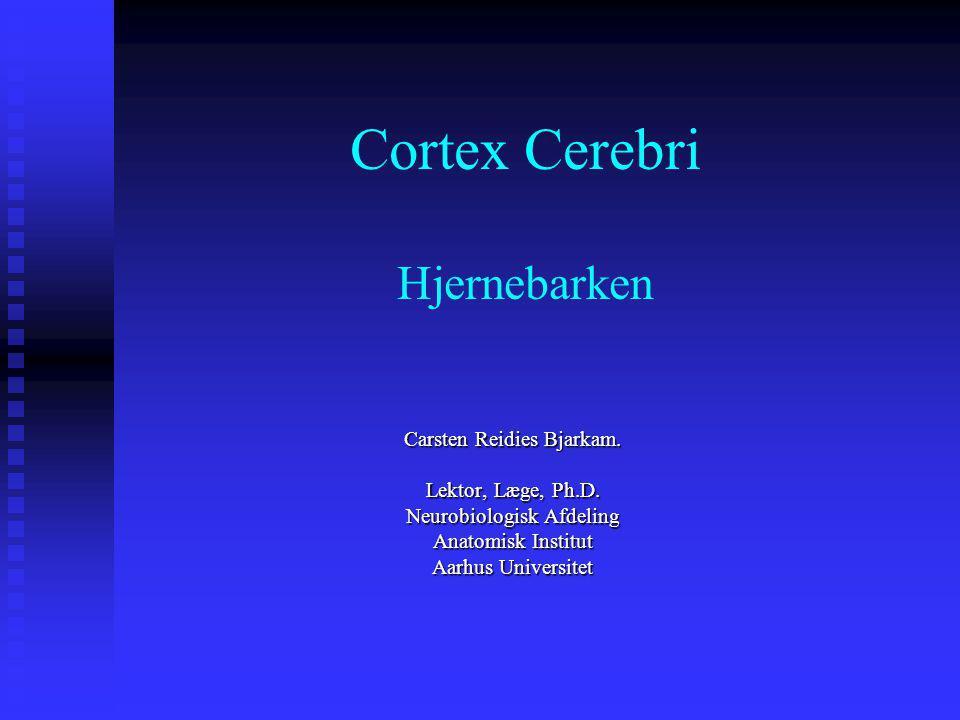 Cortex Cerebri Hjernebarken