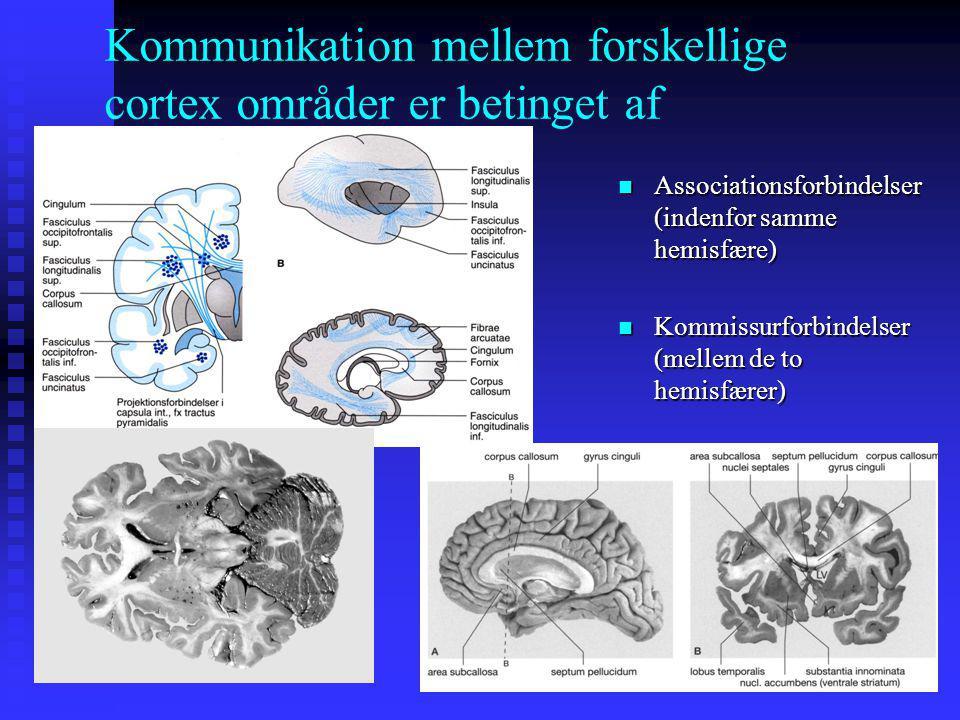 Kommunikation mellem forskellige cortex områder er betinget af