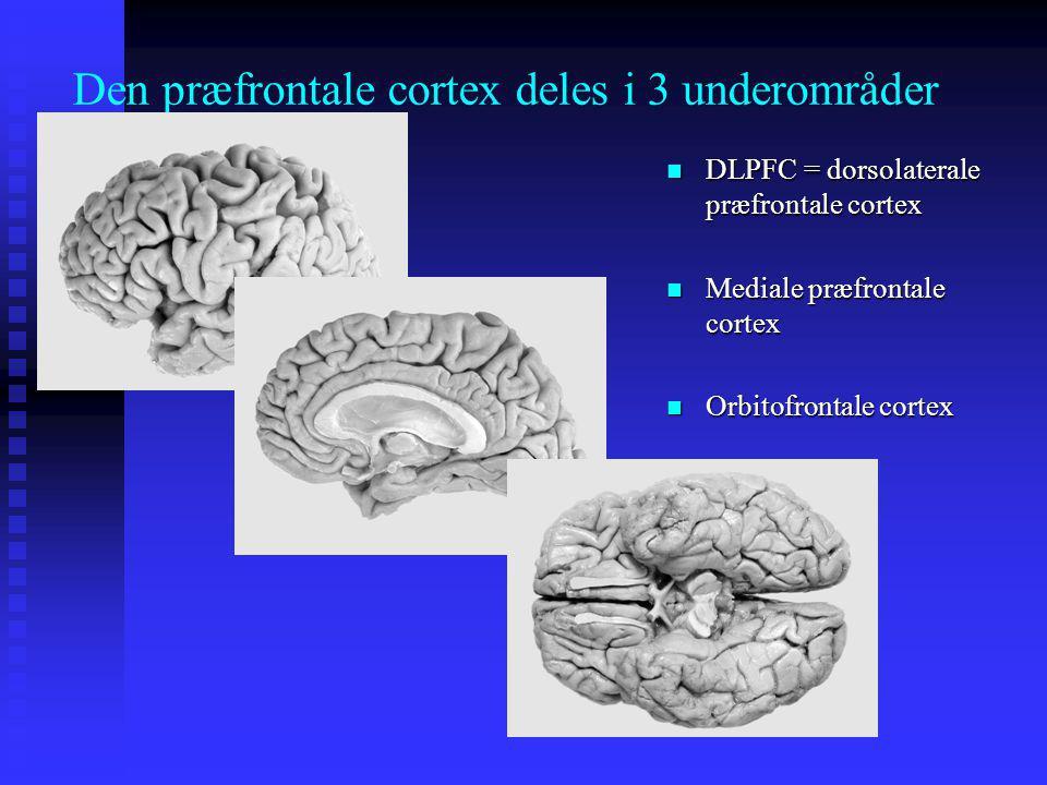 Den præfrontale cortex deles i 3 underområder