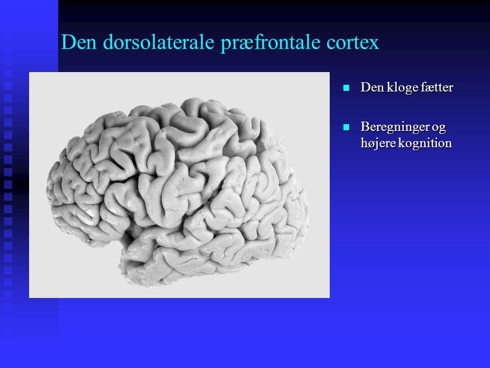 Den dorsolaterale præfrontale cortex