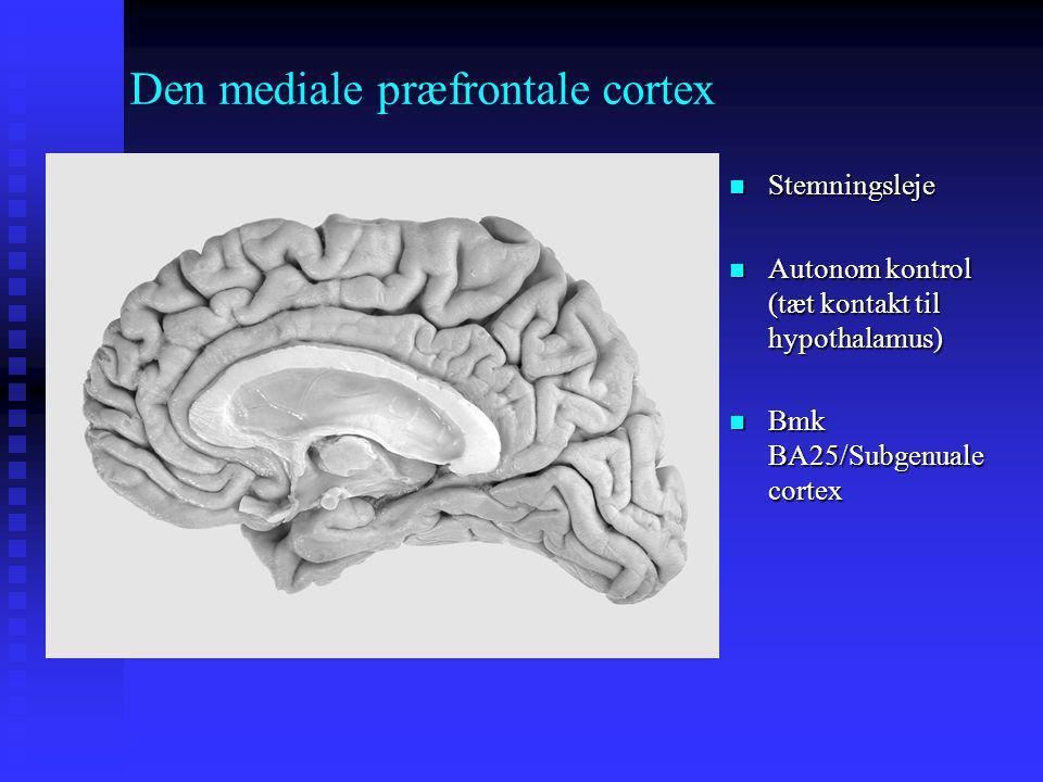 Den mediale præfrontale cortex