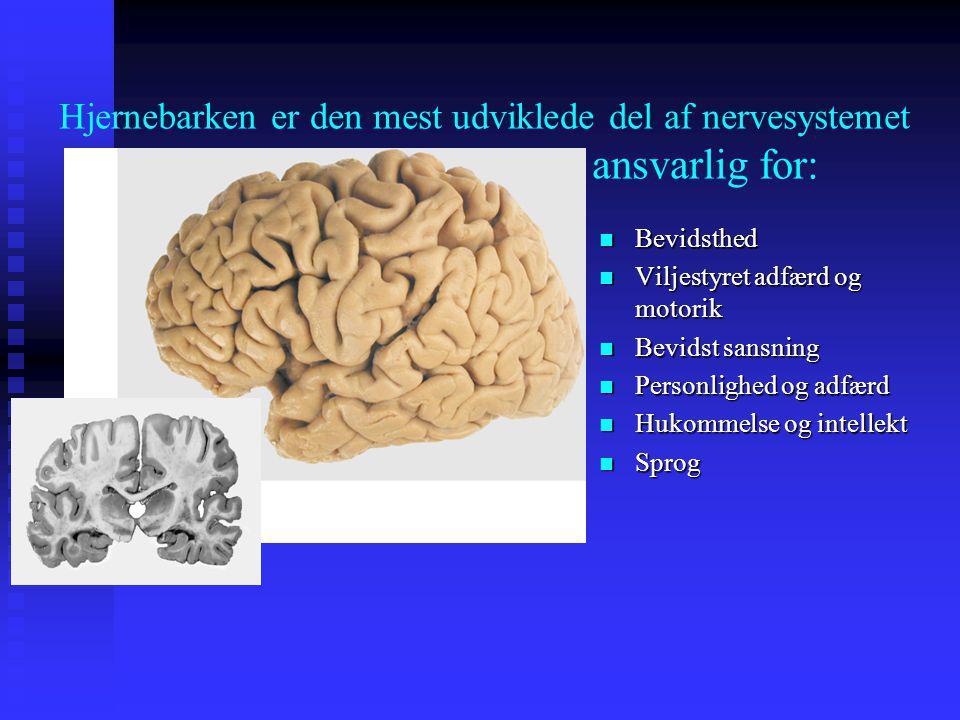Hjernebarken er den mest udviklede del af nervesystemet ansvarlig for: