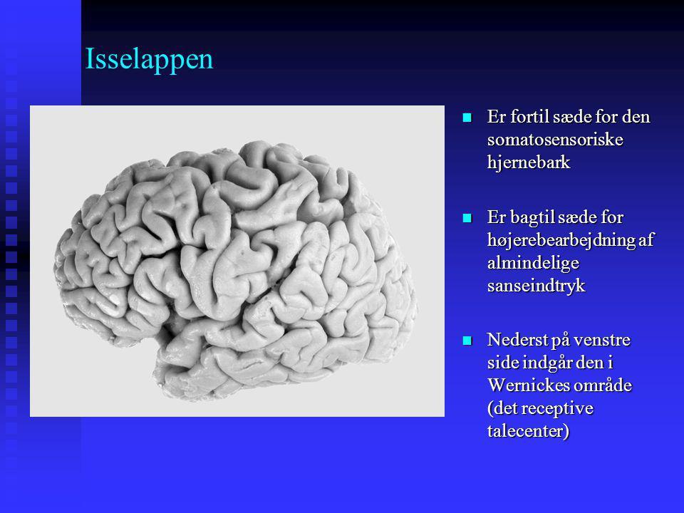 Isselappen Er fortil sæde for den somatosensoriske hjernebark