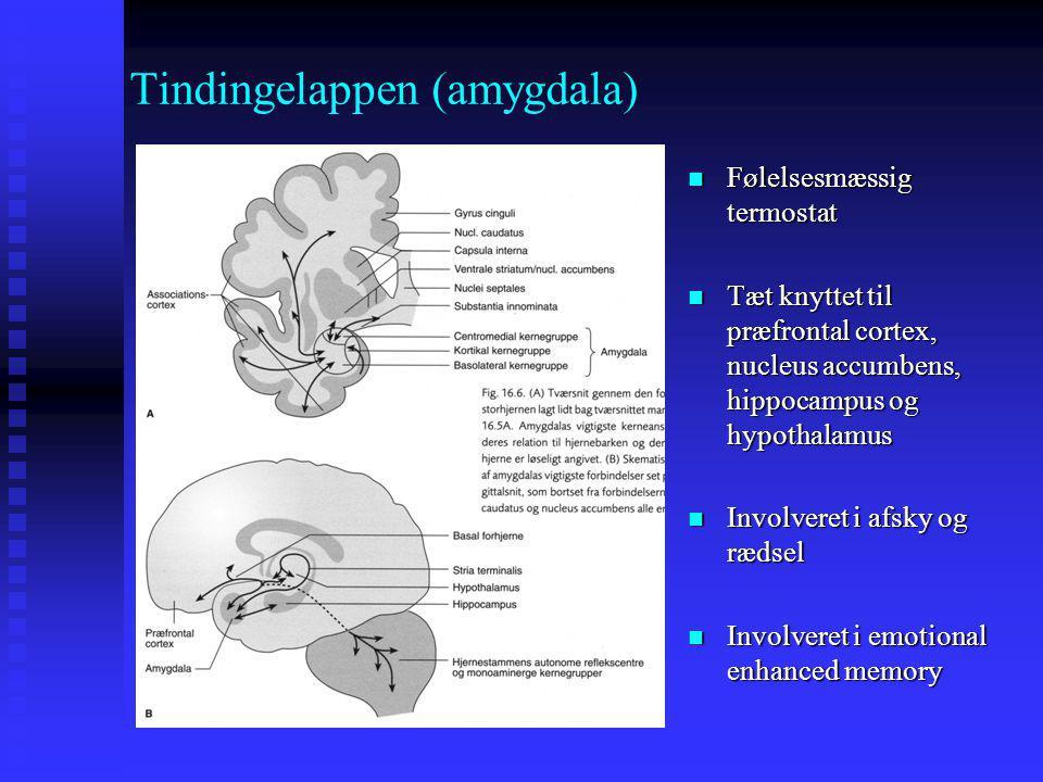 Tindingelappen (amygdala)