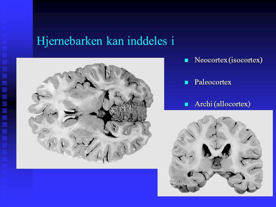 Hjernebarken kan inddeles i