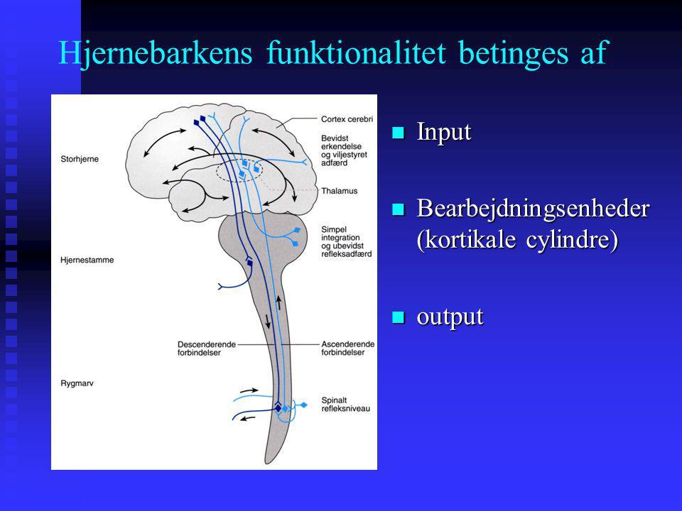 Hjernebarkens funktionalitet betinges af