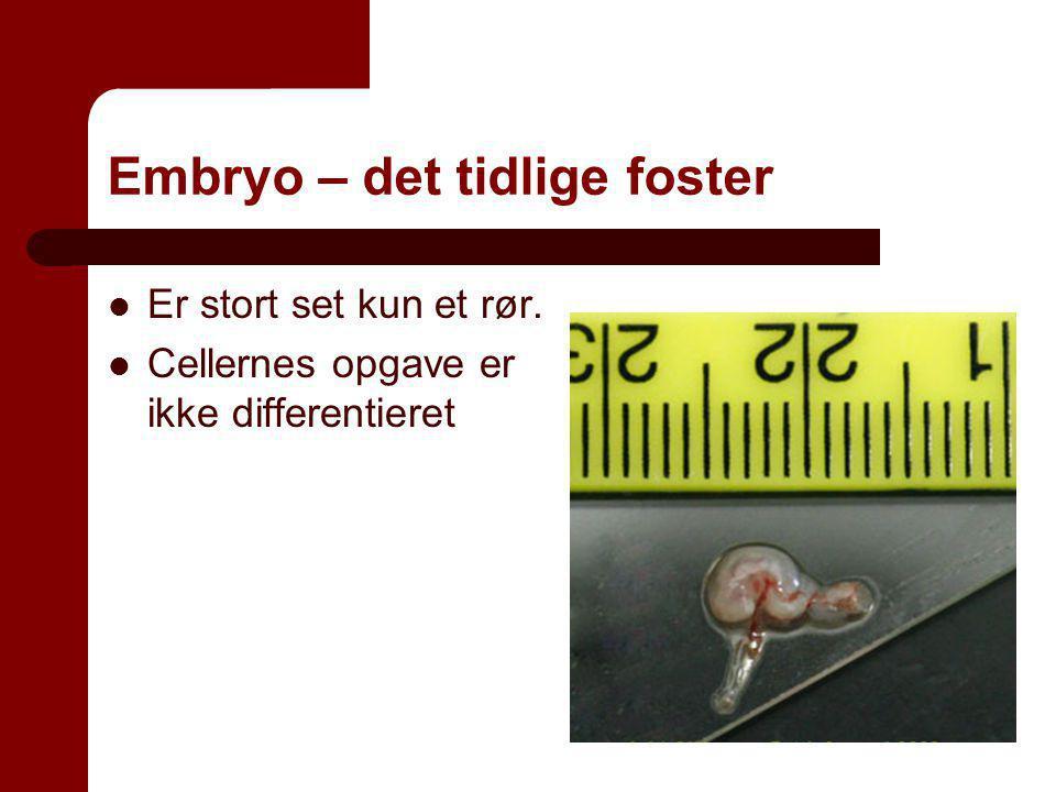 Embryo – det tidlige foster