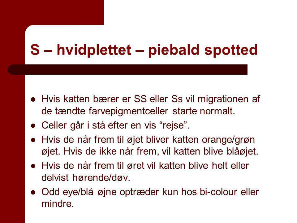 S – hvidplettet – piebald spotted